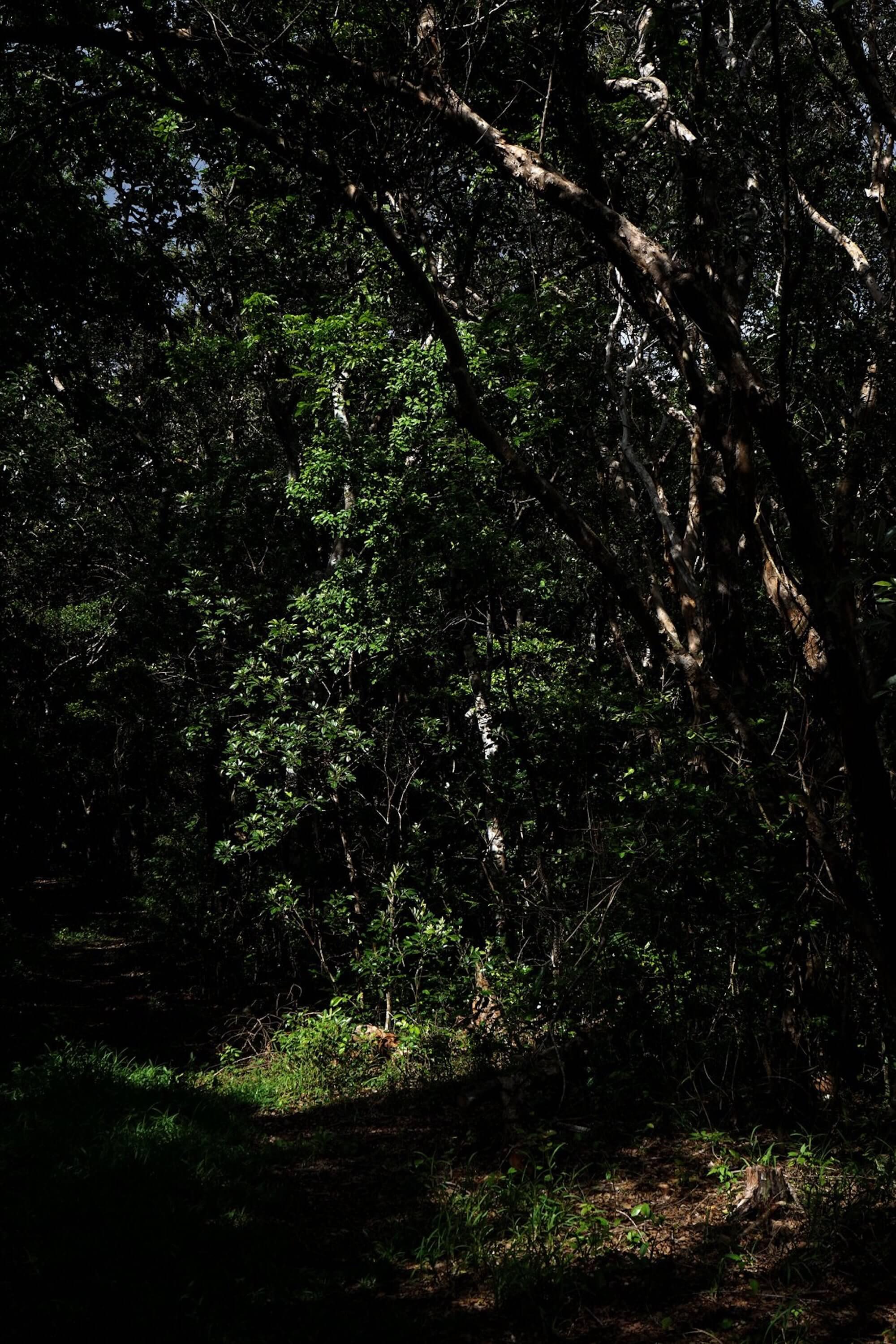 paysage sonore Sophie Marsq 1 (1)